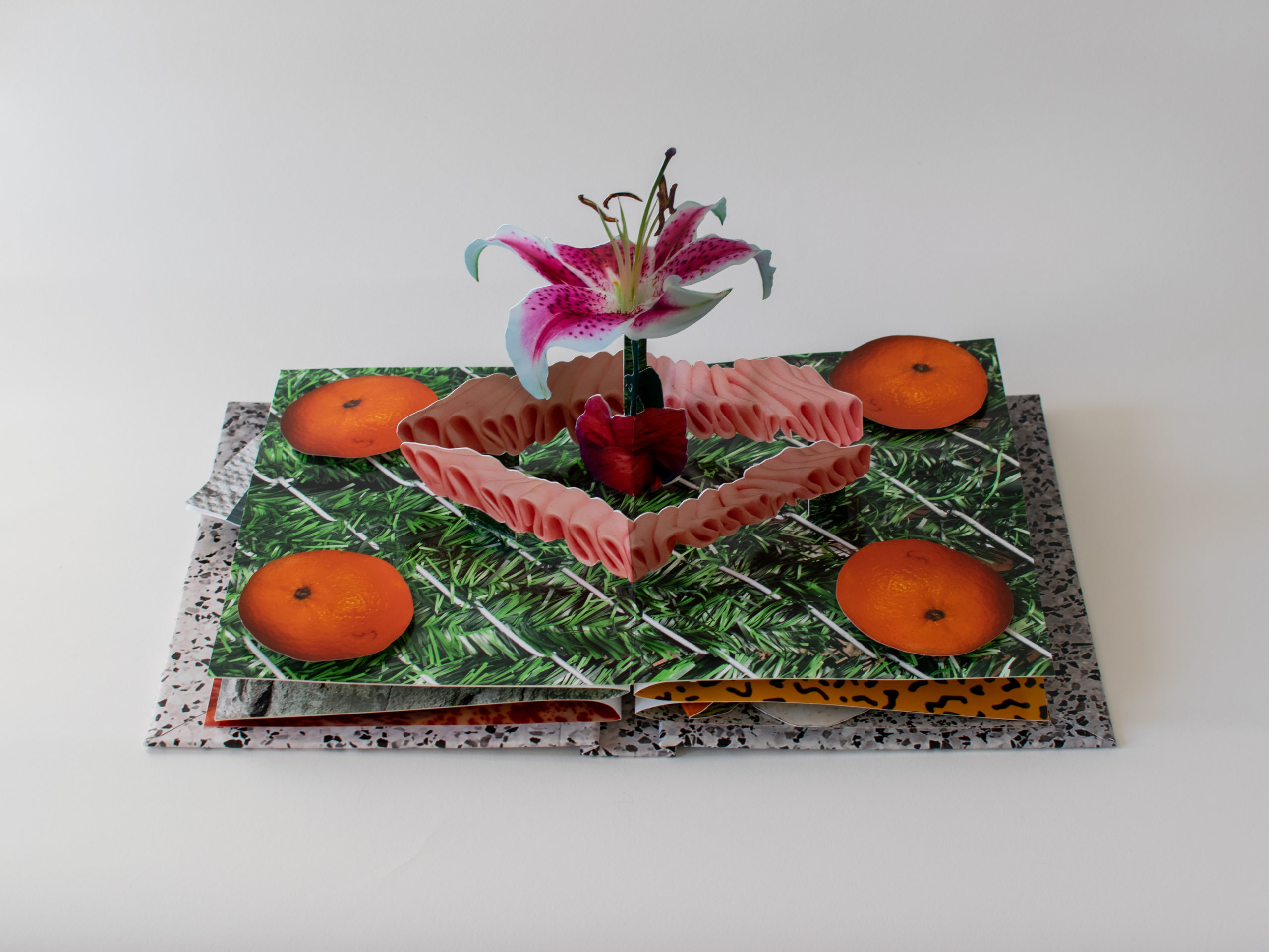 A pop up book featuring four oranges cut out of paper surrounding a square of two shades of pink and a lily emerging from the center