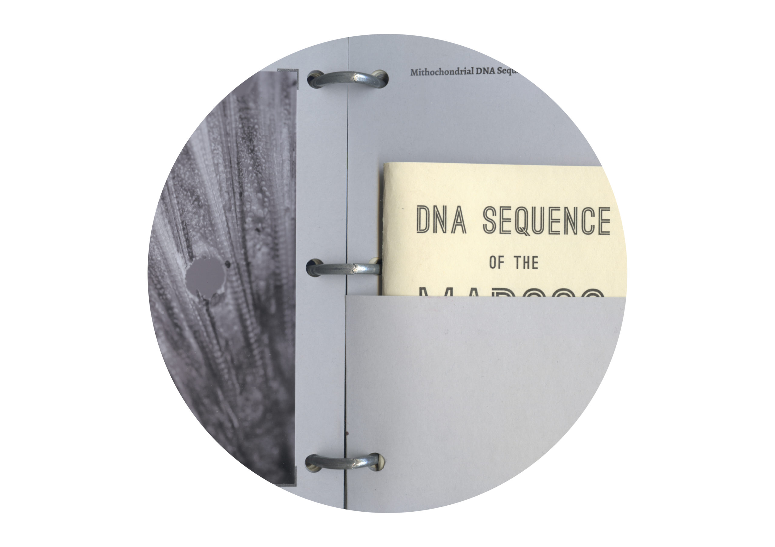 Detail image of a binder with a pocket encasing a book with the title, DNA SEQUENCE OF THE [indiscernible word]. There is a photograph on the left with organic textures that are also indiscernible.