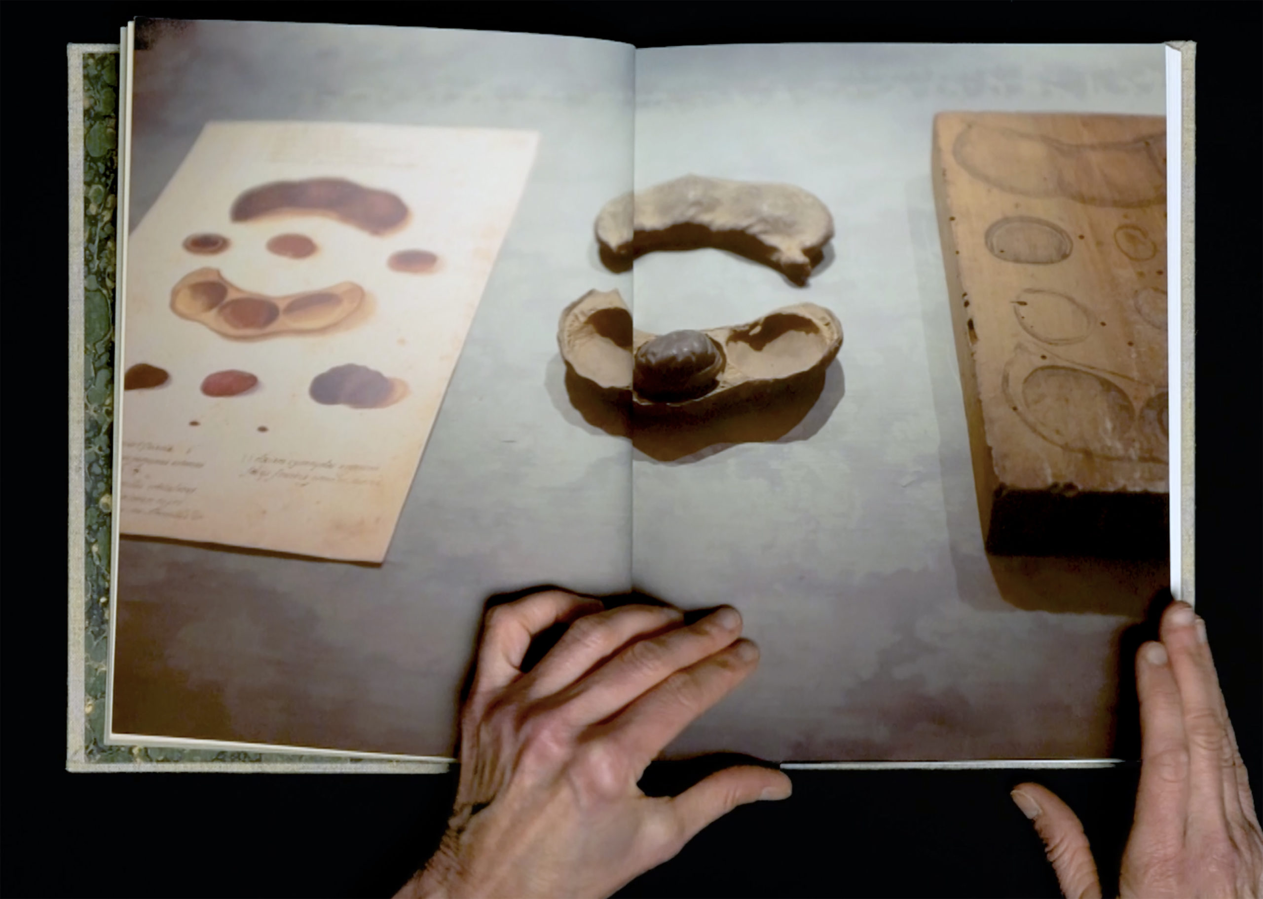Image of a pair of hands holding a book that shows organic shaped wood carvings