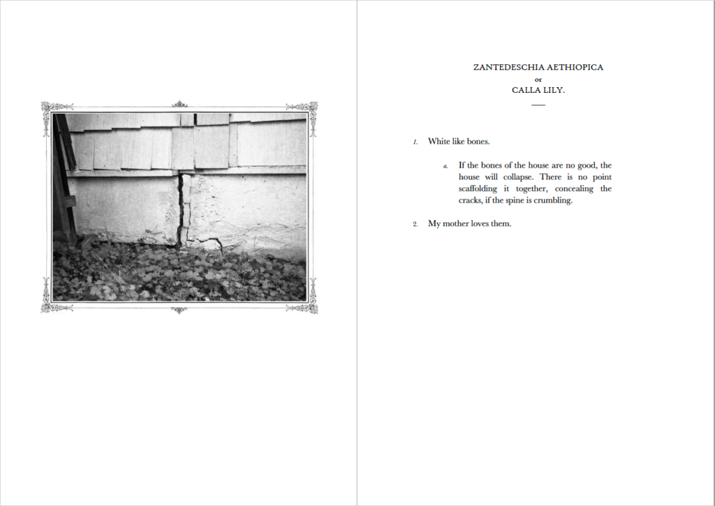 Two-page spread of a black and white photograph of a house's cracked foundation and an encyclopedic entry about calla lilies.